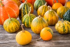 Ripe organic colored pumpkins Royalty Free Stock Photo