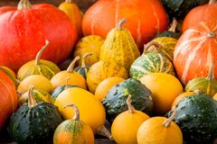 Ripe organic colored pumpkins Stock Photo