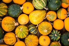 Ripe organic colored pumpkins Stock Photos