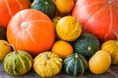 Ripe organic colored pumpkins Stock Image