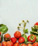Ripe organic garden strawberries with green leaves and flowers on wooden background, top view Royalty Free Stock Photos