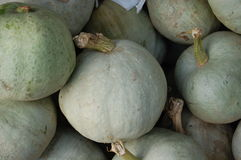 Ripe organic grey pumpkins Stock Photo
