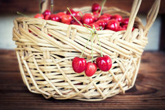 Ripe organic homegrown cherries in a basket Royalty Free Stock Images