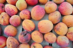 Ripe organic orange apricots packed in a wooden crate Royalty Free Stock Photography