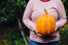 Ripe, organic, orange pumpkin in the hands. Sunny fall day. A yo. Ung woman holds in her hands a big orange pumpkin crop yields collected from his garden.  Fancy Royalty Free Stock Image