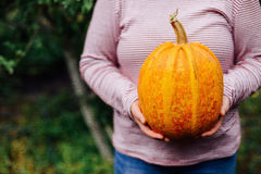 Ripe, organic, orange pumpkin in the hands. Sunny fall day. A yo Stock Photo