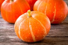 Ripe organic orange pumpkins Royalty Free Stock Image