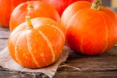 Ripe organic orange pumpkins Royalty Free Stock Photo