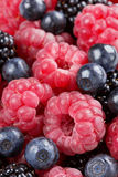 Ripe organic raspberries, blueberries and blackberries Royalty Free Stock Photography