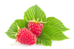 Ripe organic raspberry with green leaf Stock Photos