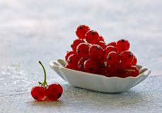 Ripe organic fresh red currant fruits Royalty Free Stock Image