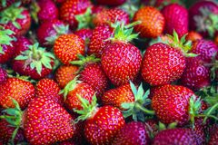 Ripe, organic, red strawberries in bulk in a box.  stock photo
