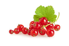 Ripe organic redcurrant Royalty Free Stock Photos