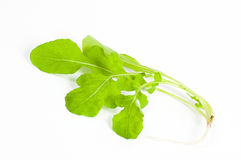 Ripe organic rocket salad Royalty Free Stock Image