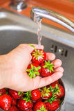 Ripe organic strawberry in hand under running water on kitchen Royalty Free Stock Photo