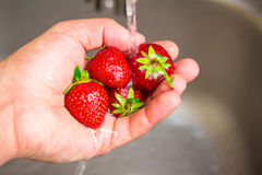 Ripe organic strawberry in hand under running water on kitchen Stock Images