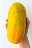 Ripe Papaya in Hand. An entire ripe papaya held in the hand of a young woman, isolated on white Stock Images