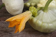 Ripe pattypan squash vegetables with yellow flower Stock Images