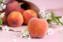 Ripe peach in the foreground next to white flowers on the background of a bag of fruit.  royalty free stock photography