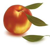 Ripe peach with green leaf. Stock Images