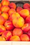 Ripe peaches Stock Images