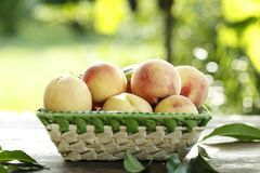 Ripe peaches. In a fruit basket on a blurred background of green foliage Stock Photography