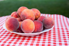 Ripe Peaches on a Plate. Colorful ripe peaches on a plate freshly served in garden Stock Images