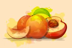 Ripe peaches, whole and slice. Vector illustration. royalty free illustration