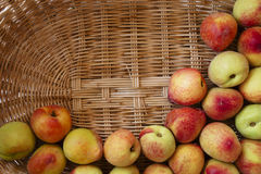 Ripe peaches in a wicker basket. Some fresh peaches in a wood basket Royalty Free Stock Photos