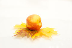 Ripe peachon the leaf on white. Background Royalty Free Stock Photography