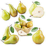 Ripe Pear. Set of Ripe Pear Fruits Isolated on White Background Stock Image