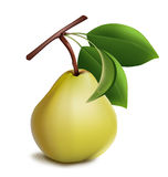 Ripe pear with green leaves. Photo-realistic . Ripe pear with green leaves Stock Images