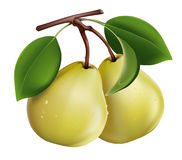 Ripe pears. Photorealistic . Ripe green pears Royalty Free Stock Photo