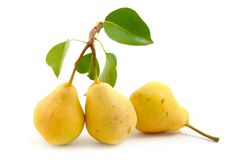 Free Ripe Pears Stock Photos - 13729233
