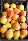 Ripe Pears. Freshly ripe pears in large boxes Royalty Free Stock Images