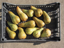 Ripe pears in box Royalty Free Stock Photos