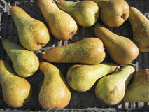 Ripe pears in box Stock Images