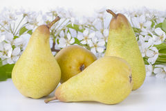 Ripe pears and flowers Stock Photos