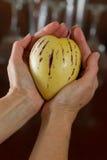 Ripe pepino melon Stock Photography