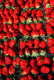 Ripe perfect strawberry. Top view, high resolution product. Royalty Free Stock Photography