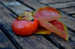 ripe persimmon leaves Royalty Free Stock Images