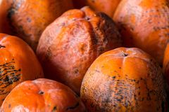Ripe persimmon of a winter crop Royalty Free Stock Photos