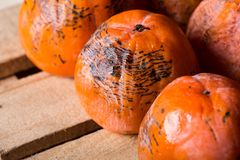 Ripe persimmon of a winter crop Royalty Free Stock Photo