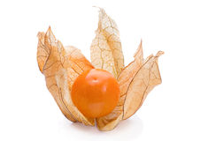Ripe Physalis Stock Image