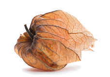 Ripe Physalis Royalty Free Stock Image