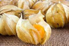 Ripe physalis fruit Stock Photography