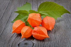 Ripe physalis (Solanaceae) Royalty Free Stock Photos