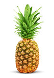 Ripe pineapple Royalty Free Stock Images