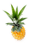 Ripe pineapple Royalty Free Stock Photography
