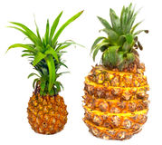 Ripe pineapple Stock Images